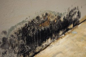 mold on the base of a drywall wall
